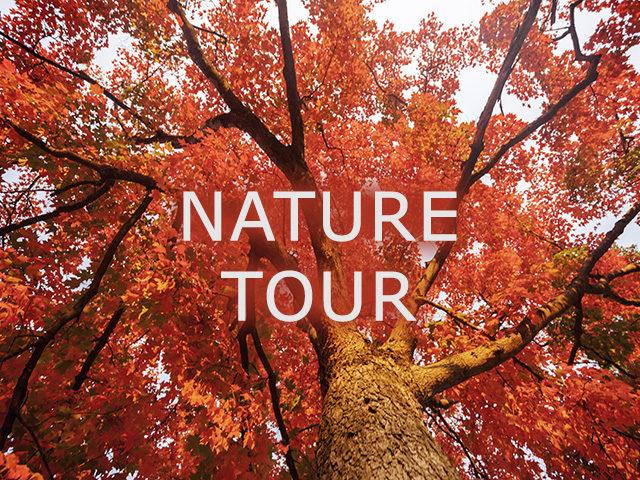 Nature Tour